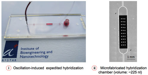 Microfluidic-assisted sample delivery and oscillation-hybridization reduces the reagent cost and assay time to a significant extent