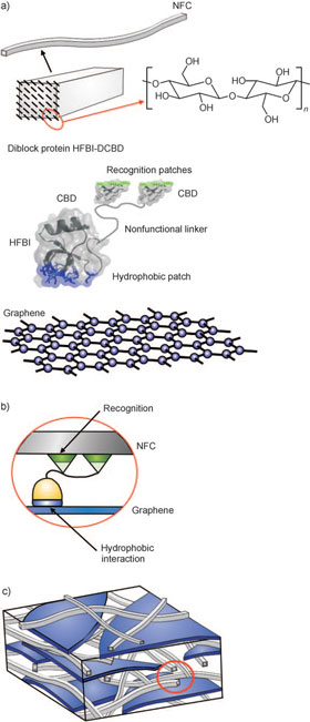 schematic presentation of the structure of graphene-protein nanocomposite