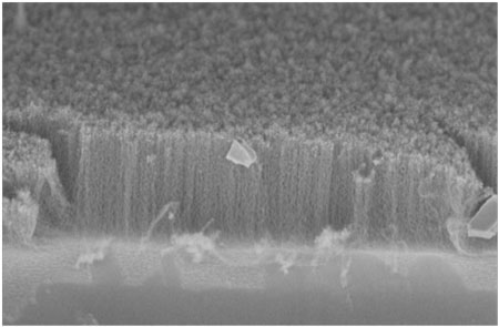 SEM image of multi-walled carbon nanotube forest on silicon substrate