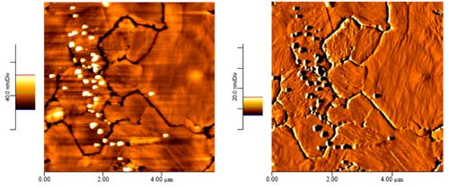 AFM images of gold nanoparticles adsorbed onto DNA-displaying gold surfaces