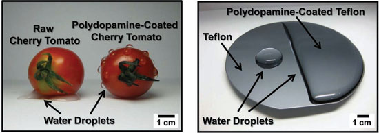 Mussel-inspired surface engineering of cherry tomato and Teflon film
