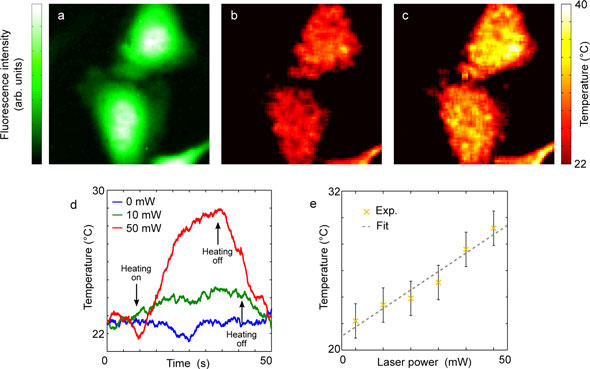 Temperature measurements in HeLa cells while delivering local heat via photothermal approach