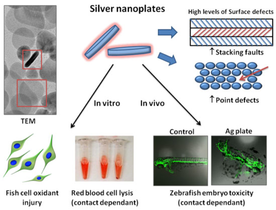 Point defects and stacking faults on the surface of silver nanoplates catalyze the production of reactive oxygen species that damage fish gill epithelial cells, red blood cells, and zebrafish embryos