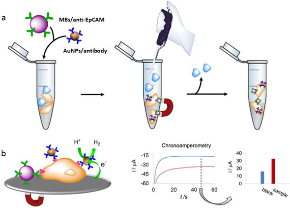 Simple Monitoring of Cancer Cells Using Nanoparticles