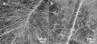 Carbon nanotube cotton spun into a fiber