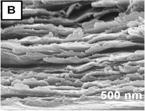 Scanning electron microscopy characterization of a 300-bilayer, free-standing PVA-MTM nanocomposite