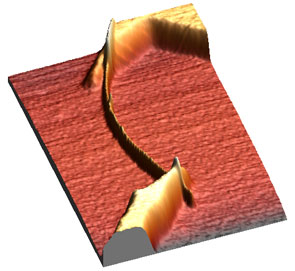 AFM image of connected multi-wall carbon nanotube