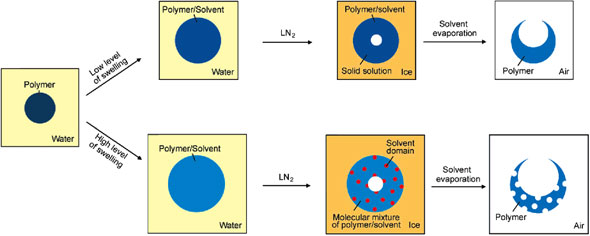 formation of microscale fish bowls from pre-synthesized polymer beads