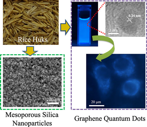 Comprehensive utilization of rice husks for high quality graphene quantum dots and mesoporous silica nanoparticles