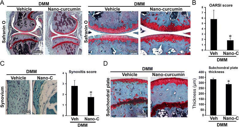 Topically applied curcumin nanoparticles alleviates joint