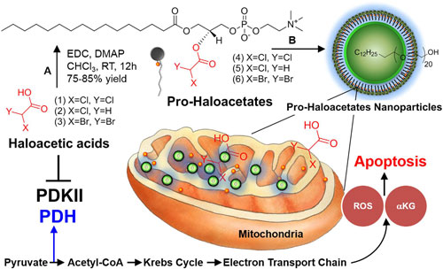 Repairing cancer cell suicide mechanism (programmed cell death)
