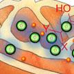 nanoparticles_in_mitochondria