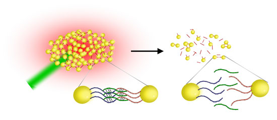 Gold nanostoves as DNA melting assay