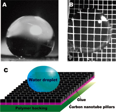 Superhydrophobic behavior of micropatterned carbon nanotube pillars