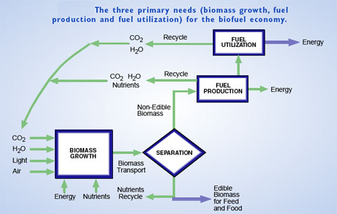 the three primary needs for the biofuel economy