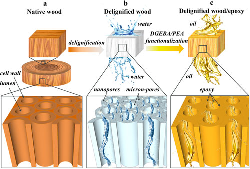 schematic illustration of structural design of porous and functional wood  materials for selective separation of oil