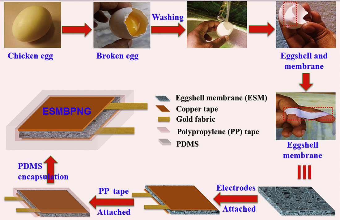 Eggshell membranes from bio waste could be harvesters for