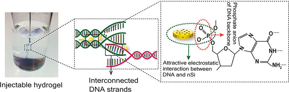 DNA-based nanocomposite hydrogel as a potent injectable drug