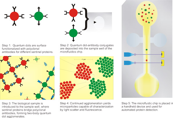 Quantum Dot Self-Assembly for Protein Detection
