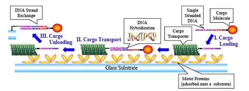 molecular delivery system