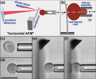 Biomembrane Force Probe