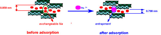 Scheme for the removal of the radioactive ions through ion exchange and structure deformation