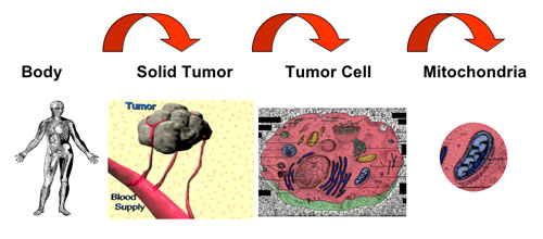 Three levels of targeting cancer