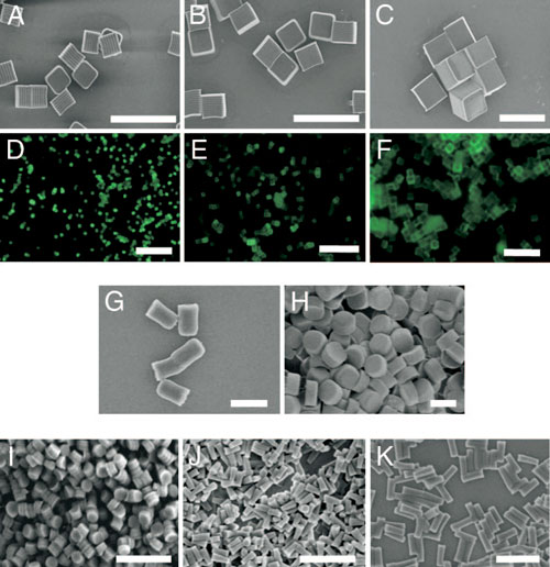 Micrographs of PRINT particles varying in both size and shape