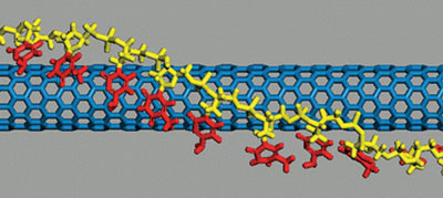 A structure model of DNA-wrapped carbon nanotube