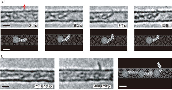 Organic molecules passing through a pore in the wall of carbon nanotube