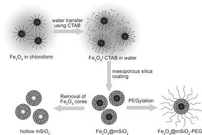 Schematic illustration of the synthetic procedure for magnetite nanocrystal/mesoporous silica core–shell nanoparticles