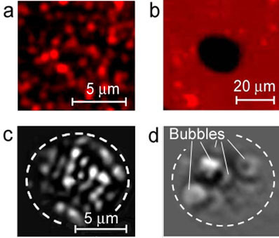 fluorescence images of QDs before (a) and after (b) one laser pulse