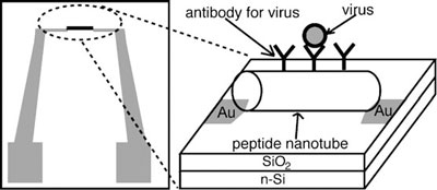 Design of the pathogen-sensor platform assembled from peptide nanotubes. The peptide nanotube incorporates virus-recognition elements on the surface