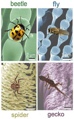 The nanoscale fibrillar structures in the hairy attachment pads of beetle, fly, spider and gecko