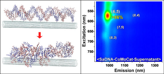 The image on the left shows a model of the DNA interacting with the SWCNTs using classical all-atom molecular dynamics simulations and the right panel is the normalized photoluminescence excitation emission contour plot of DNA d(GT)20 dispersed SWCNTs