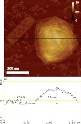 AFM and cross section of two-layer and multilayer nano assemblies